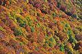 Pennellate d'autunno- Monte Amaro - Foto Angelina Iannarelli.jpg