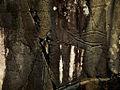 Petroglyph vibrant (7171025298).jpg