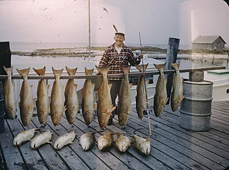 Game fish - Big-game saltwater fish caught off of Cape Hatteras in 1949