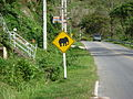 Phuket Road sign elephant.JPG