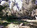 Picnic area, San Diego Mtns.jpg