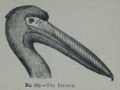 Picture Natural History - No 169 - The Pelican.png