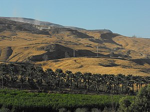 Jordan Valley (Middle East) - Date palms of kibbutz Gesher, Jordan Valley.