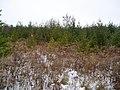 Plantation - panoramio (1).jpg