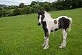 Playful colt (6879456853).jpg