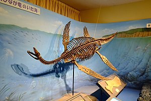 Plesiosaurus - Restored skeleton in Japan