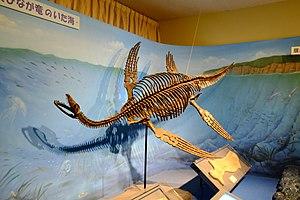 Plesiosaurus - Restored skeleton in Japan