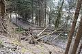 Poertschach Forstweg zur Poertschacher Alm 03032014 448.jpg