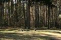 Pole namiotowe, jezioro Głęboczek - panoramio (8).jpg