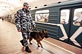 Police dog in Moscow Metro.jpg
