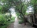 Poncirus trifoliata 3.jpg