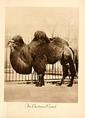 Portraits at the zoo (1915) (14566727440).jpg