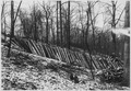 Posts that were worked up to be used as fences - NARA - 286179.tif
