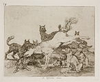 Surrounded by wild wolves, a horse kicks and bucks defending its freedom and its life. A group of wolf hounds look on passively.