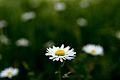 Primavera... (13968816642).jpg