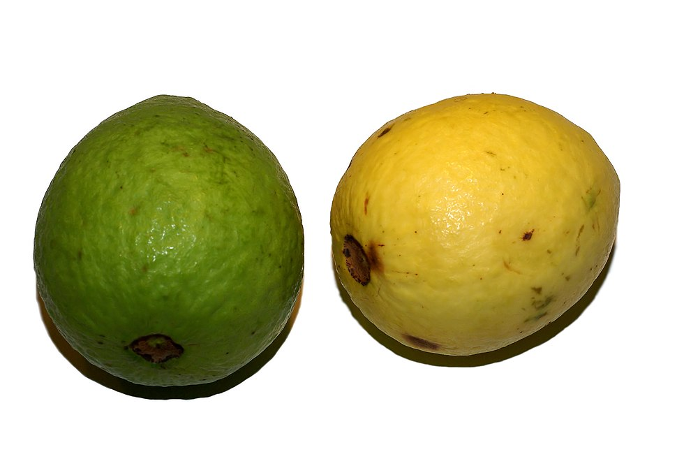 Psidium guajava (fruit)