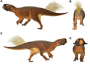 1923 in paleontology - Psittacosaurus