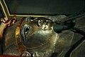 Psusennes.jpg