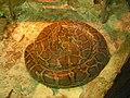 Python - Питон - panoramio.jpg