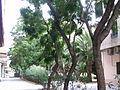 Pz La Safor VLC a.jpg