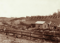 Queensland State Archives 2499 Farmers wagons and train at Teviotville on Huttons Pig Day c 1898.png