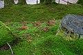 Radioactive moss (4154471830).jpg