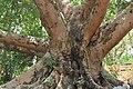 Ramu, Cox's Bazar 05.jpg