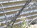 Razor wire, detail.jpg