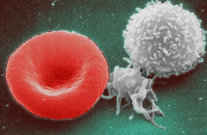 Red White Blood cells