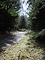 Rennsteig Impression - panoramio.jpg