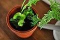 Restaurant Noma Radiser og gulerødder i spiselig jord (4959763896).jpg