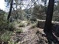Restes del Pantà de la Xuriguera (abril 2013) - panoramio.jpg