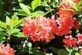 Rhododendronpark Bremen 20090513 221.JPG