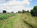 Rhubarb patch near Chaddesley Corbett - geograph.org.uk - 472254.jpg
