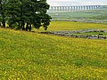 Ribblehead Viaduct from Broadrake - geograph.org.uk - 1382195.jpg