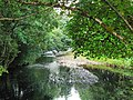 River Add through the trees - geograph.org.uk - 1015061.jpg
