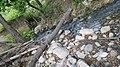 River in jijel.jpg