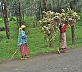 Road between Gisenyi and Ruhengeri - Flickr - Dave Proffer.jpg