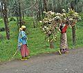 Road between Gisenyi and Ruhengeri - Flickr - Dave Proffer.jpg