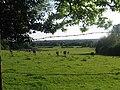 Rockford Common - geograph.org.uk - 391209.jpg