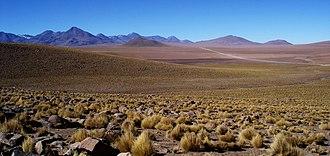 Puna grassland - Puna grassland in the Chilean altiplano