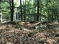 Rubkow Großsteingrab Kuhbergholz (1).jpg