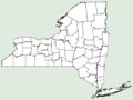 Rudbeckia laciniata var bipinnata NY-dist-map.png