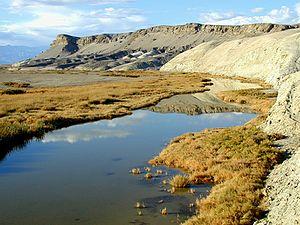 Death Valley pupfish - The spring-fed pools of upper Salt Creek are the year-round habitat of pupfish