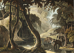 Nature's Valley - A Scene in Sitsikamma, fanciful 1801 painting by Samuel Daniell showing Asian elephants in the Tsitsikamma Forest