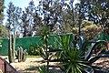 San Juan de Aragón Zoo plants 1.jpg
