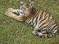 Save Tiger.jpg