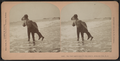 Say that again, and I'll dip you in, Atlantic City, N.J, from Robert N. Dennis collection of stereoscopic views.png