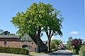 Schleswig-Holstein, Tangstedt, Naturdenkmal 39-01 NIK 3392.JPG