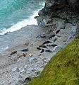 Seals (2418364399).jpg
